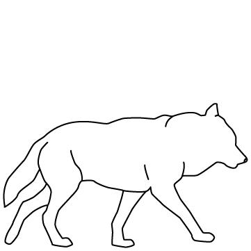 狼(オオカミ)のサムネイル