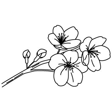 桜の花のサムネイル