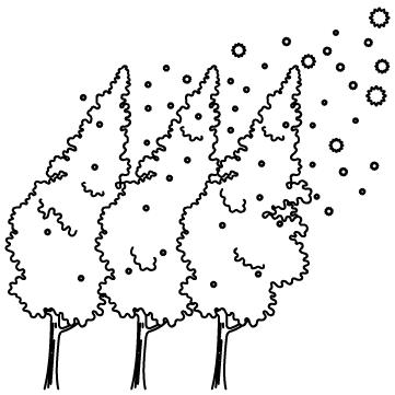 杉の木花粉のサムネイル