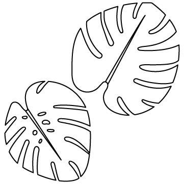 モンステラ(ホウライショウ)のサムネイル