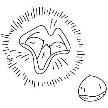 栗(くり)のサムネイル