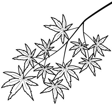 紅葉(もみじ)の木のサムネイル