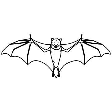 飛ぶコウモリ(蝙蝠)のサムネイル