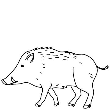 猪(いのしし)のサムネイル