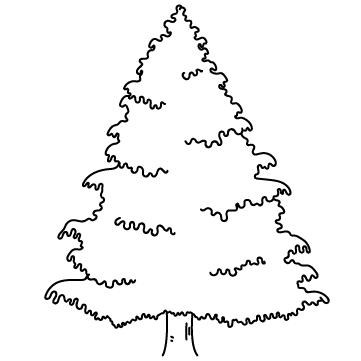 モミの木のサムネイル