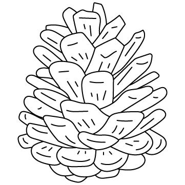 松ぼっくり (松毬)のサムネイル