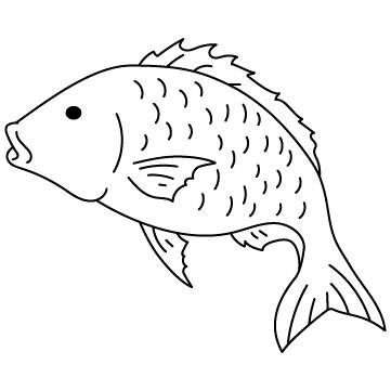 めで鯛のサムネイル