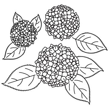 アジサイ(紫陽花)のサムネイル